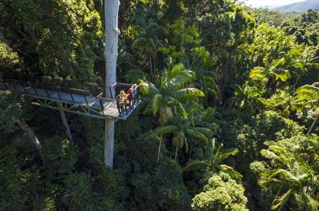Tamborine Rainforest Skywalk, Attraction, things to do Tamborine Mtn