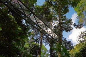 Skywalk Tamborine, Treetops walk, Canopy Bridge