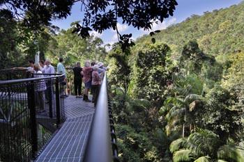 Rainforest Skywalk, Tamborine Attraction, National Park