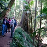 Guided Walks, National Park, Tamborine Mountains, 4WD tour, Southern Cross