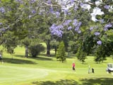 Activities Mount Tamborine, fun outing, play golf