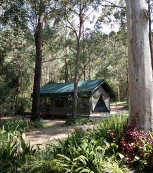 Camping Tamborine, Caravan Park, Thunderbird Park