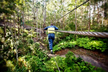 High ropes course, Tamborine Mtn, Challenge, Activity, Adventure