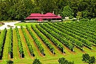 O'Reilly's Canungra Valley Vineyard