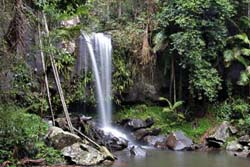 Tamborine Mountain National Park, Waterfalls, Bushwalking, Lyrebrid