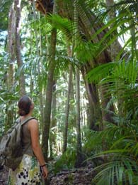 Tamborine National Park, Mt Tambourine, Waterfall, Bush walking, Glow Worms