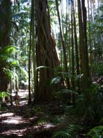 Tamborine National Park, Bushwalking, Rainforest, Waterfalls