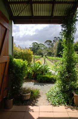 Mount Tambourine, Winery, Wine Tasting, Gold Coast Hinterland