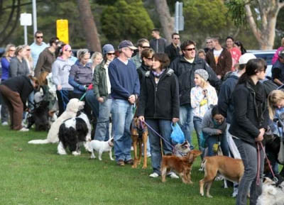 Million Paws Walk, Charity Fund Raiser, Pets day out