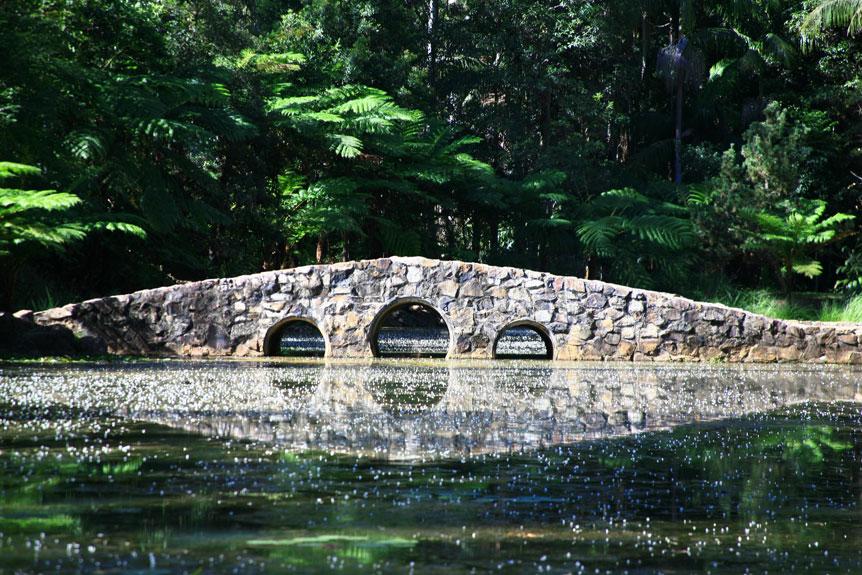 Mt Tambourine, Botanical Gardens, Cherry Blossom Walk
