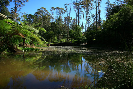 Tamborine Mountain Botanic Garden, National Park