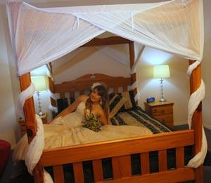 Tamborine Weddings, Bridal Suite, Bearded Dragon