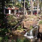 Cafe Tamborine, Curtis Falls, Mt Tambourine