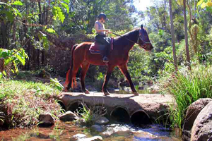 Tamborine National Park, Trail Riding, Rainforest, Waterfall, Adventure