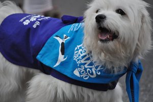 Million Paws Walk, RSPCA, Fundraising Event, Family Fun
