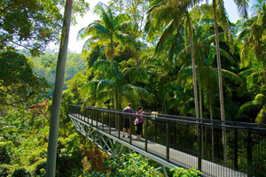 Skywalk, Rainforest Tamborine, Cantilever, skywalking, eco center