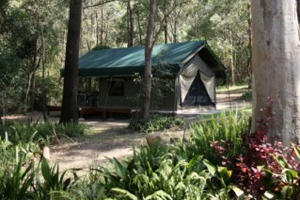 Caravan and camping, Tamborine Mountain, shady creek sites, luxury safari tens, glamping