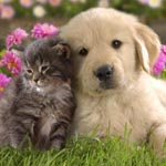 Pet Friendly Tamborine Mtn, Accommodation for cats and dogs