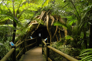 Glow Worm Tours, Tamborine Attraction, Cedar Creek Estate