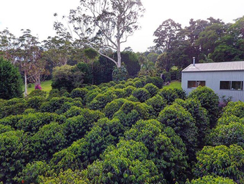 Tamborine Mtn Coffee Plantation, Green Lane Cafe, Tambourine National Park