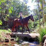 Horse Riding Tamborine Mountain, Thunderbird Park Trail Rides