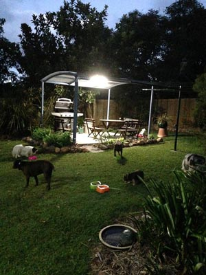 Dog friendly, Tamborine Accommodation. Cottages for pets