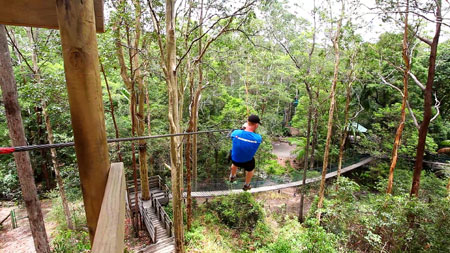 Tamborine Flying Fox, TreeTop Challenge, Attraction