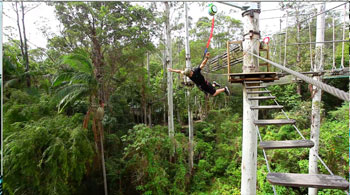 Bungee Jumping Tamborine, National Park, Adrenalin Attractions