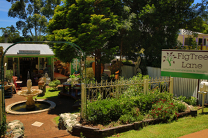 Fig Tree Lane, Gallery walk, Shopping Mount Tambourine, National Park