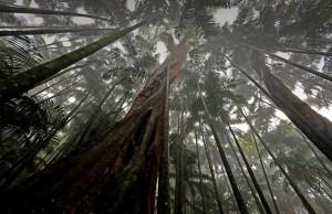 rainforest-mount-tamborine0126