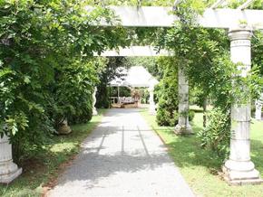 Tamborine Garden Wedding, Natinal Park, Curtis Falls