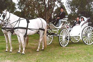 Champagne Wedding Carriages, Tamborine Weddings, Landau Carriage