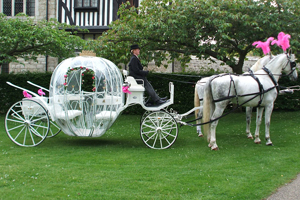 Drayhorse Shires, Wedding Carriages, Transport for the bride, Weddings Tamborine Mtn