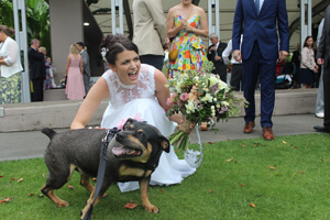Pet Wedding Chauffeuring, Weddings on Tamborine Mtn, Pet Chauffeuring