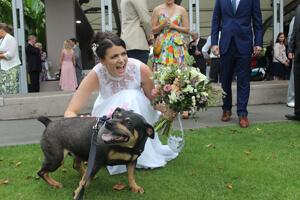 Pet Wedding Chauffeuring, Weddings on Tamborine Mtn, Pet Chauffeuring