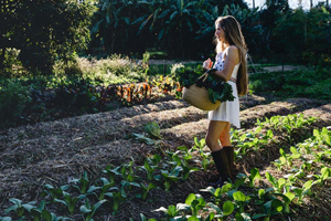 Sacred Earth Wholefoods, Tamborine Organic Produce, Health Food