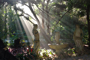 Tea and Niceties, Garden Weddings, Ceremonies, Tamborine Weddings